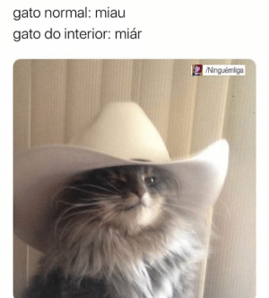 : gato normal: miau  gato do interior: miár  /Ninguémliga