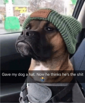 Club, Kevin Hart, and Shit: Gave my dog a hat. Now he thinks he's the shit laughoutloud-club:  This dog looks like Kevin Hart.