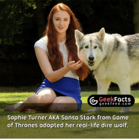Memes, Sophie Turner, and Sansa Stark: Geek  Facts  g e e k f Sophie Turner AKA Sansa Stark from Game  of Thrones adopted her real-life dire wolf Everytime a dire wolf dies on the show a part of me does too. Who's looking forward to season 7? 🖐🏼 Follow @geekfacts @geekfeeddotcom @geekquote