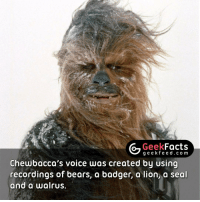 Hands up who knew this fact? 🖐🏼 Follow @geekquote @geekfeeddotcom @geekfacts: Geek  Facts  g e e k fe e d c o m  Chewbacca's voice was created by using  recordings of bears, a badger, a lion a seal  and a walrus. Hands up who knew this fact? 🖐🏼 Follow @geekquote @geekfeeddotcom @geekfacts