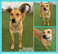 Dogs, Food, and Memes: General  A470008 Email Placement@sanantoniopetsalive.org if you are interested in Adopting, Fostering, or Rescuing!  Our shelter is open from 11AM-7PM Mon -Fri, 11AM-5PM Sat and Sun.  Urgent Pets are at Animal Care Services/151 Campus. SAPA! is Only in Bldg 1 GO TO SAPA BLDG 1 & bring the Pet's ID! Address: 4710 Hwy. 151 San Antonio, Texas 78227 (Next Door to the San Antonio Food Bank on 151 Access Road)  **All Safe Dogs can be found in our Safe Album!** ---------------------------------------------------------------------------------------------------------- **SHORT TERM FOSTERS ARE NEEDED TO SAVE LIVES- email placement@sanantoniopetsalive.org if you are interested in being a temporary foster!!**