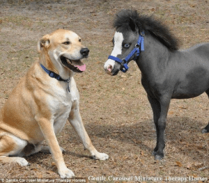 Hold Your Horses: Gentle Carousel Miniature Therapy Horses Hold Your Horses