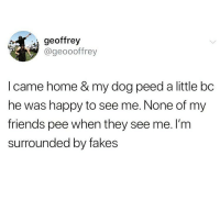 Friends, Funny, and Happy: geoffrey  @geoooffrey  I came home & my dog peed a little bc  he was happy to see me. None of my  friends pee when they see me. l'm  surrounded by fakes If you don't pee a little when I walk up to you, we not friends anymore 😤