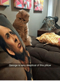 Memes, Skepticism, and 🤖: George is very skeptical of this pillow