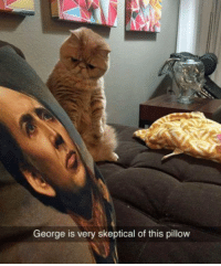 Memes, Skepticism, and 🤖: George is very skeptical of this pillow Can you blame him?