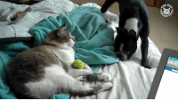 It's the cat's ball now hee hee. Seen via The Animal Rescue Site: gEP  ECT  Ao34  °Co It's the cat's ball now hee hee. Seen via The Animal Rescue Site