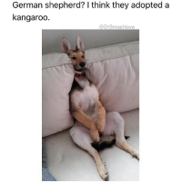 "Ass, Bad, and Bless Up: German shepherd? I think they adopted a  kangaroo  @DrSmashlove Alright here go part 2 of my friend zone post. First, the problem with men is, a lot of them generally don't understand how this attraction shit works. A woman is gon fuck with u for a variety of factors - looks, humor, ambition, etc. If your mix don't do it for her bruh it's physiological. Her vagina lips recede into her body and a little elf named Susan who lives in that vagina and wears a purple robe all day puts a sign outside saying ""CLOSED FOR SERVICE."" Meanwhile if she fuck with your wave, Susan start harassing her telling her to be ratchet. ""Who cares if you didn't shave"" ""take them panties off"" ""GURL - why u being prude"" ""SEE THIS IS WHY U AINT MARRIED"" ""just let him take his PP out - just so u could look at it 🤗"" <- Susan is a bad ass influence 🤗😂. Nah but if Susan don't like u, she don't like u. And every time u try to be sexual, Susan gon be more aggravated. ""GIRL, THIS MAN IS GROSS. CUT HIS ASS OUT."" Men y'all gotta understand that if a woman friend-zones u, u can't kick your desire to seduce her ass into overdrive. Quite the CONTRARY - u gotta: (1) fall back, (2) be a good friend (type she could rely on - which just generally u should do for your friends anyway), (3) most of all, be extremely chill - like overly platonic. Don't let a hug linger - Susan will be annoyed. Again, u trying to do the opposite of reel her in. Maybe even refer to her as ""Lil Sis"" - u feel me? Then just watch. Susan will be confused. ""Lil Sis? This motherfucker just liked me last year! Talmbout 'lil sis'. GIRL, KISS HIM WHILE U DRUNK. JUST TO FUCK HIS HEAD UP 💅."" And then when she kiss u pull back like ""ayeee u ok? Lol"". Now Susan will be damn near commanding her to mount yo ass and ride u like Kentucky Derby. U feel me? And that's the bottom line. Ladies if he knows how to be a good FRIEND and not have EXPECTATIONS then let him stick around. Maybe even give him a lil Mercy Punani 🌹. If he trying to hump yo leg like a lonely dog erry time u see him, then cut him loose - u don't wanna upset Susan 🤗. Bless up 😍😂😂😂"