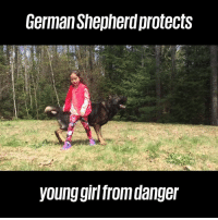 Dank, German Shepherd, and Girl: German Shepherd protects  young girl from danger German Shepherds are so loyal. This is incredible! 👏🐶