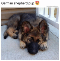 "Bless Up, Memes, and Whip: German shepherd pup  Dr Smashlove Men my advice to u is, be specific. U gotta understand, if yo girl send a selfie, u could say something u think is sweet: ""you pretty baby"", ""you beautiful"", ""wow your boobs look big I like it that"". Yes: ""it that"". U motherfuckers so dry that u done dehydrated your grammar and syntax and have rendered them nonsensical. Straight up Sahara Desert level reply game. She might not reply to your dry-ass reply but she thinking: ""wow you can fuck right off with your sandpaper dry ass."" Give her a lil specificity that applies to how she looks in particular and emphasizes a unique feature: ""baby your thighs - so toned yet so soft, perfect and inviting - leave work and come wrap those around my face, let Daddy get a taste"". Keep it sexy and dirty. If her Punani taste good, tell her. Describe it. Listen to your palette. Same way u be at work dinners and it's always that one asshole Pete who's like ""this wine has oaky notes, with a peppery overtone ☺️"" (it's spoiled grape juice, shut your whore mouth PETE 😀), I let a girl know her flavor notes. If her Punani taste like cookie dough soft serve ice cream drizzled in warm caramel with sweet, chewy gum drops on top smothered in whip cream and then two Maraschino cherries on top of that, I tell her. ""Oh baby ur juice tastes good"" <- Bruh y'all become illiterate when it come time to talk sweet to your girl. Be descriptive. I mean, keep it G, and exercise proper restraint, but be playful. Or don't keep it G and don't exercise restraint, like me ☺️. With me, every shot is a direct shot 🏹. I'm liable to just be like ""Let me make sweet, passionate, unprotected love to you in the missionary position and then when I'm done I'll hold your legs up and pinch the Punani shut to ensure fertilization 👶."" <- I don't recommend this course of action. It work for me because I'm not right in the head and people know that 😩. For the rest of y'all I recommend using your words and focusing on her one-of-a-kind attributes. Make her blush. U get me! BLESS UP 🖤😂😂😂"