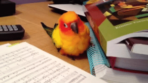 Books, Confused, and Music: geromanly: superziggy:  In attempts to get Teka to stop chewing at my books, I put on some dance music.  Poor buddy's confused because it wants to eat book, but HAS to dance