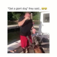 """Giant, Dog, and They: """"Get a giant dog"""" they said The dog is like """"uhh.. whoops"""""""