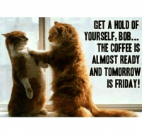 Dank, Friday, and Coffee: GET A HOLD OF  YOURSELF, BOB.  THE COFFEE IS  ALMOST READY  AND TOMORROW  IS FRIDAY!