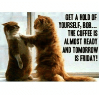 Friday, Memes, and Coffee: GET A HOLD OF  YOURSELF,BOB..  THE COFFEE IS  ALMOST READY  AND TOMORROW  IS FRIDAY! Adult Humour