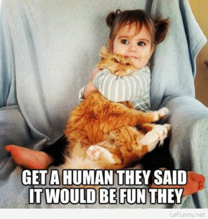 Funny, Net, and Cat: GET A HUMAN THEY SAID  IT WOULD BE FUN THEY  LeFunny.net Funny cat with human – photo