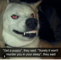 "Memes, Puppy, and Sleep: ""Get a puppy"", they said. ""Surely it won't  murder you in your sleep"", they said"