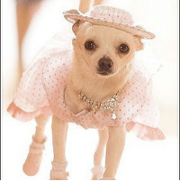 Get Chloe's Beverly Hills Chihuahua Fashions at Store.FamousChihuahua.com #beverlyhillschihuahua #socute #chihuahuaclothes #chihuahuafashion #chihuahua #dogclothes #dogfashion #beverlyhillsdog: Get Chloe's Beverly Hills Chihuahua Fashions at Store.FamousChihuahua.com #beverlyhillschihuahua #socute #chihuahuaclothes #chihuahuafashion #chihuahua #dogclothes #dogfashion #beverlyhillsdog