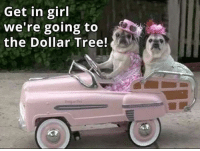 Dank, Dollar Tree, and 🤖: Get in girl  we're going to  the Dollar Tree! #jussayin