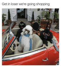 25 Best Get In Loser Were Going Shopping Memes Going Memes Get