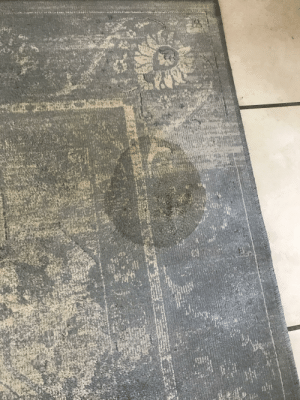 Get my carpets cleaned this week before the our shutdown begins due to COVID. Day 1, dog has a wee on my carpet.: Get my carpets cleaned this week before the our shutdown begins due to COVID. Day 1, dog has a wee on my carpet.