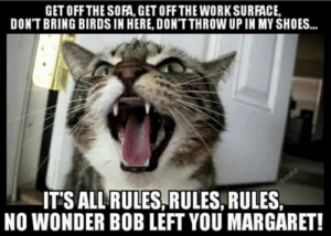 Shoes, Work, and Birds: GET OFF THE SOFA, GET OFF THE WORK SURFACE,  DON'T BRING BIRDS IN HERE, DONT THROW UP IN MY SHOES..  ITS ALLRULES,RULES, RULES  NO WONDER BOB LEFT YOU MARGARET!  catshit