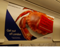 i feel like this crab is threatening me: Get out  of London i feel like this crab is threatening me