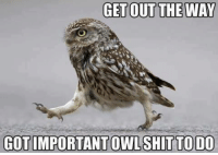 lol: GET OUT THE WAY  GOT IMPORTANT OWL SHIT TO DO lol