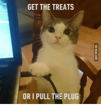 "9gag, Memes, and 🤖: GET THE TREATS  ORI PULL THE PLUG ""You left me no choice, hooman."" Follow @9gag @9gagmobile 9gag instacat cute attention"