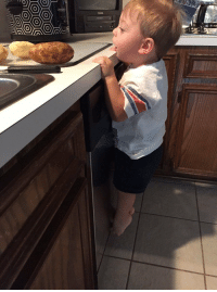 Girl Memes, Boy, and Who: get you someone who looks at you the way this little boy looks at potatoes https://t.co/qR4nfHp08p