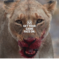 "Love, Memes, and Game: GET YOUR  GAME  FACE ON. Hustle mode activated! Just keep in mind that ""hustle"" isn't just working on the things you like. It means doing the things you don't enjoy doing so you can do the things you love.🔥 - gameone hustle grind success millionaiorementor"