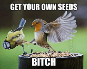 Winter Is Coming…: GET YOUR OWN SEEDS  BITCH  Cjoke fun.com Winter Is Coming…