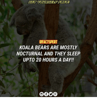 Animals, Energy, and Memes: GET YOURSELF FAGT  DFACTSPERT  KOALA BEARS ARE MOSTLY  NOCTURNAL AND THEY SLEEP  UPTO 20 HOURS A DAY! Koalas are mostly nocturnal. Nocturnal animals are awake at night and asleep during the day. Koalas, however, sleep for part of the night and also sometimes move about in the daytime. They need more sleep than most animals because eucalyptus leaves contain toxins and are very low in nutrition and high in fibrous matter so they take a large amount of energy to digest. ⠀ 🙇🏻GET YOURSELF FACT FOLLOW➡️@FACTSPERT ⠀ ↗️↗️