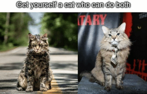 Can Do Both: Get yourselfa cat who can do both  TARY