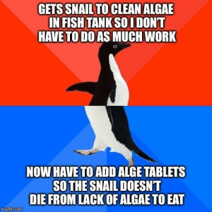 It made sense in theory: GETS SNAIL TO CLEAN ALGAE  IN FISH TANK SO I DONT  HAVE TO DO AS MUCH WORK  NOW HAVE TO ADD ALGE TABLETS  SO THE SNAIL DOESNT  DIE FROM LACK OF ALGAE TO EAT  mgrlup.com It made sense in theory