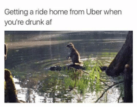 Memes, Bristol, and 🤖: Getting a ride home from Uber when  you're drunk af 😂😂😂🚕🚕🚙🚙👇 Save yourself a £15 journey by signing up to uber using the code *WILLENT* 👈 GET HOME FOR FREE ON ME! 😎 READINFO 👇 1. DOWNLOAD THE UBER APP FROM THE STORE 2. CREATE AN ACCOUNT WITH UBER 3. ENTER PROMO CODE *WILLENT* 4. ENJOY YOUR £15 FREE UBER RIDE! PROVIDING A WORLDWIDE SERVICE 🌍🌍 🚕🚕🚕🚕🚕🚕🚕🚕🚕🚕🚕🚕 PROMOCODE: *WILLENT* (CLICK THE LINK IN THE BIO TO GET STARTED) - ➡️MAKE SURE YOU USE YOUR CODE BEFORE EXPIRATION DATE ⬅️😎 - UK London Birmingham Liverpool Carnival Leeds Southampton Portsmouth Uber Belfast Bristol Dublin Nottinghill NottinghillCarnival Leicester Nottingham Manchester Merseyside Newcastle Cab FreeRide Weekend UK 2016 Summer UberCodes UberEverywhere