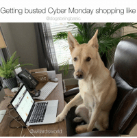 America, Memes, and Shopping: Getting busted Cyber Monday shopping like  @dogsbeingbasic  willardsworld Every worker in America right now. Pup @willardsworld