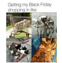 Af, Black Friday, and Memes: Getting my Black Friday  shopping in like Shopping cart goals AF