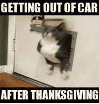Getting out of CAR after thanksgiving!: GETTING OUT OF CAR  AFTER THANKSGIVING Getting out of CAR after thanksgiving!