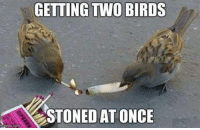 Memes, 🤖, and Stone: GETTING Two BIRDS  STONED AT ONCE Thanks Kimberly Reprogle! Games ==========> http://trailerparkboysgames.com/