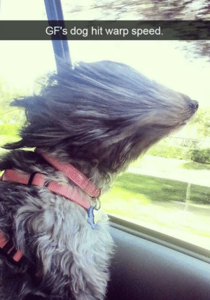 Warp Speed: GF's dog hit warp speed Warp Speed