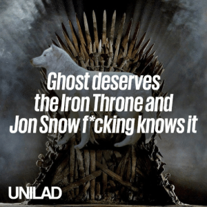 Ghost is the true MVP of Game of Thrones, and everyone knows it 🐺: Ghost deserves  the Iron Throne and  Jon Showf cking knowsit  UNILAD Ghost is the true MVP of Game of Thrones, and everyone knows it 🐺