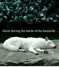 Memes, 🤖, and Ghosts: Ghost during the battle of the bastards: Ghost better show up tonight. We need our direwolf fix. GameOfThrones