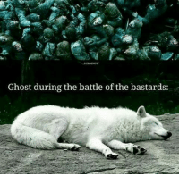 Memes, Ghost, and 🤖: Ghost during the battle of the bastards: ~Tyrion