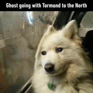 Dank, Ghost, and Good: Ghost going with Tormund to the North You'll always be our good boi.
