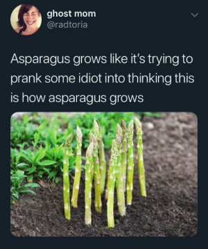 Prank, Asparagus, and Ghost: ghost mom  @radtoria  Asparagus grows like it's trying to  prank some idiot into thinking this  is how asparagus grows You ain't fooling no one