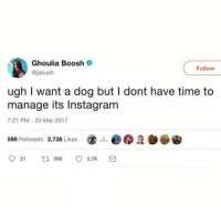Dogs, Instagram, and Memes: Ghoulia Boosh  @jabush  Follow  ugh I want a dog but I dont have time to  manage its Instagram  7:21 PM -20 Mar 2017  ⑧.画@  598 Retweets  2,738 Likes  21 乜598 2.lkS 1. Do you have time to run a dog insta 2. Can you keep it safe and feed it 3. Do you have a high quality camera 4. Is your preferred insta handle taken 5. Do you like dogs Tw jabush