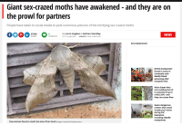 Asian, News, and Sex: Giant sex-crazed moths have awakened - and they are on  the prowl for partners  People have taken to social media to post numerous pictures of the terrifying sex-crazed moths  By Lorna Hughes & Nathan Standley  COMMENTS 12:12, 16 JUN 2018 UPDATED 14:09, 16 JUN 2018  37949  NEWS  RECOMMENDED  British backpacker  found in coma in  Cambodia with  deadly blood  poisoning after  mosquito bite  Asian Super Ants  are invading the UK  in colonies of up to  a MILLION -and  they an cause fires  Seven dangerous  critters that could  invade your home  during 330C  heatwave -  including 'deadly'  mosquitoes  One woman found a moth the size of her hand (Image: Liverpool Echo/Julie Jones)