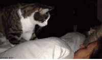 """Alive, Beautiful, and Cats: GIFAK.NET dontattackme:  agentoklahomasragehappiness:  myfirstname:  niggaimdeadass:  did u kno that cats do this while you're asleep to check if you're breathing? and if you're not alive they will start eating you at that very moment  tragically beautiful  TRAGICALLY BEAUTIFUL!?!? THE CAT'S DOING ITS VERSION OF """"IS IT FUCKING DEAD YET""""!   I do this to check if my friends are sleeping too"""