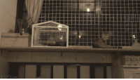 Cats, Gifs, and Com: GIFS.com <p>Incoming Cats In Sync.</p>