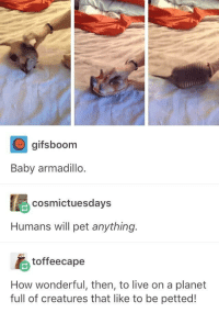 """Http, Live, and Baby: gifsboorm  Baby armadillo  cosmictuesdays  Humans will pet anything.  toffeecape  How wonderful, then, to live on a planet  full of creatures that like to be petted! <p>Pet anything and everything. via /r/wholesomememes <a href=""""http://ift.tt/2EPxdrW"""">http://ift.tt/2EPxdrW</a></p>"""