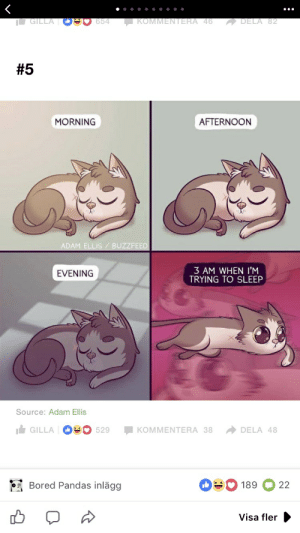 Bored, Buzzfeed, and Sleep: GILLA  DELA 82  654  KOMMENTERA 46  #5  AFTERNOON  MORNING  ADAM ELLIS BUZZFEED  3 AM WHEN I'M  TRYING TO SLEEP  EVENING  Source: Adam Ellis  GILLA 529  KOMMENTERA 38  DELA 48  Bored Pandas inlägg  189  22  Visa fler